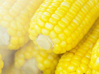 Tempo de cozimento: milho verde