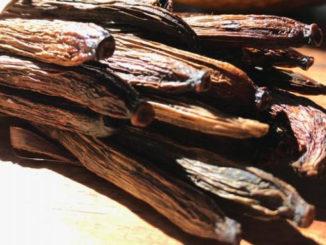 Baunilha-do-cerrado é encontrada em Goiás