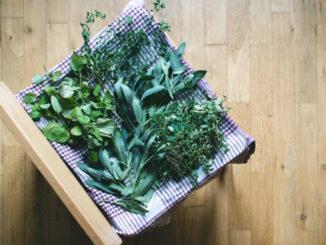 Substituir ervas frescas por secas sem errar